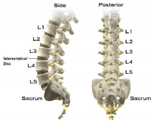 lumbar spine lumbar spine l5