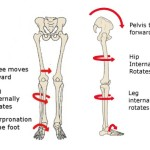 effects of anterior pelvic tilt