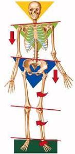 leg length compensations
