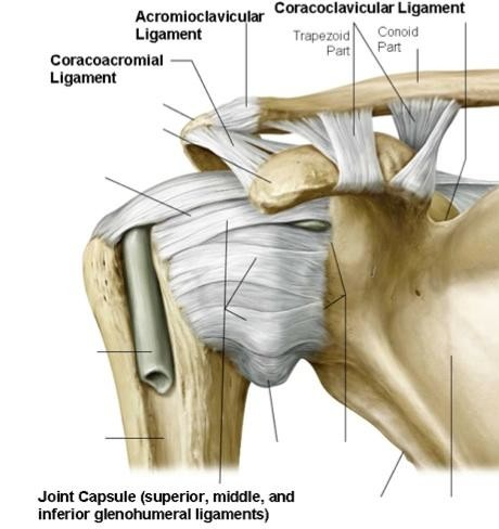 Shoulder Range of Motion - Manchester-Bedford Myoskeletal LLC
